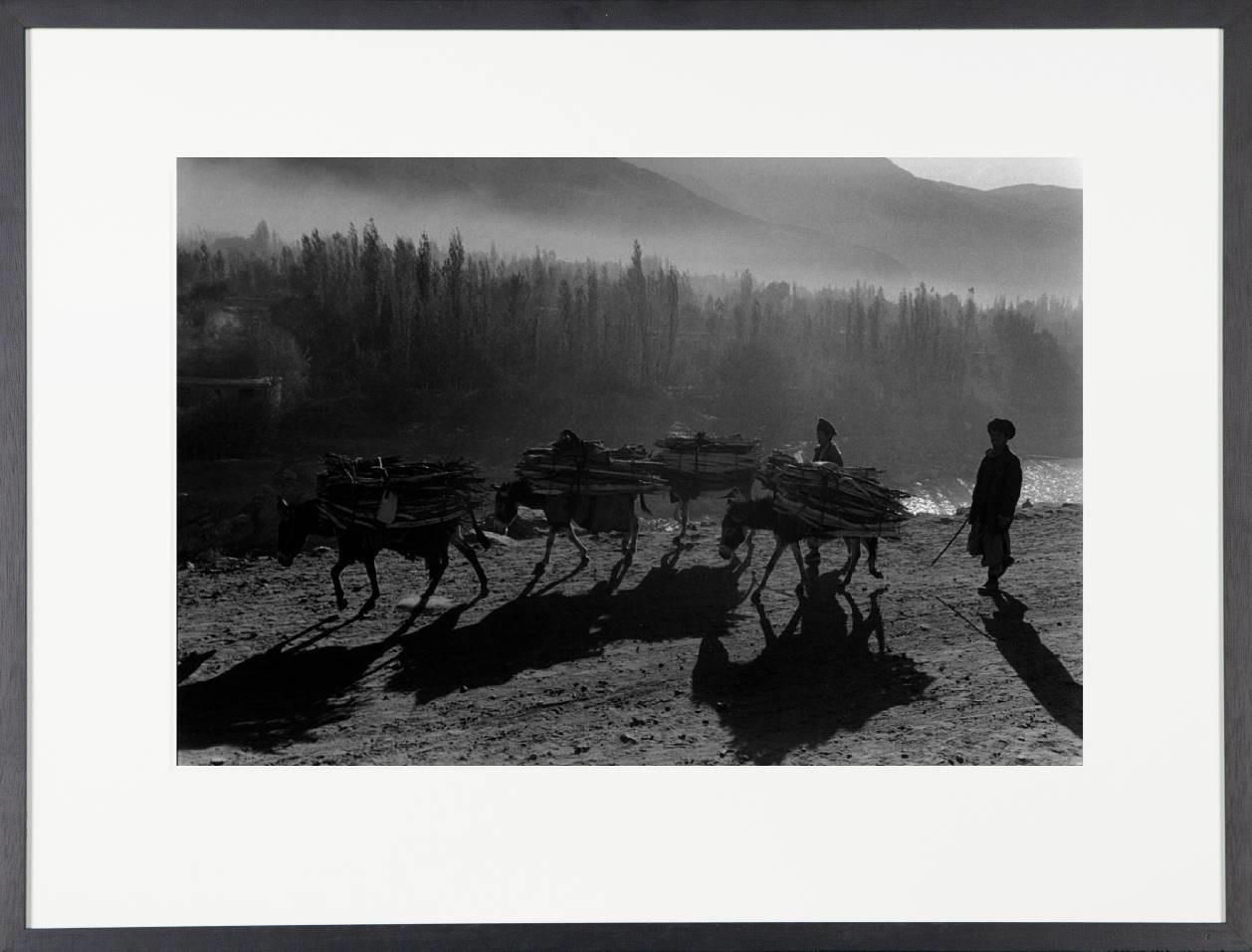 Afghanistan, donkeys in the mist